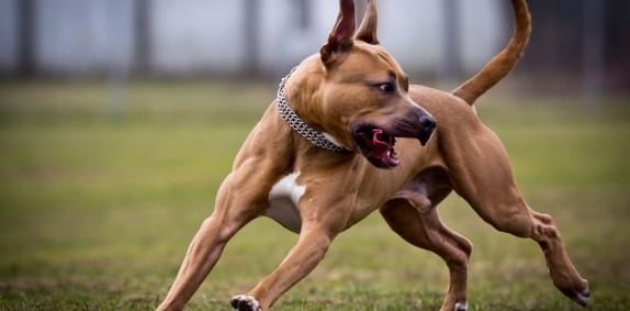 Tierhalterhaftpflicht Hunde & Pferde